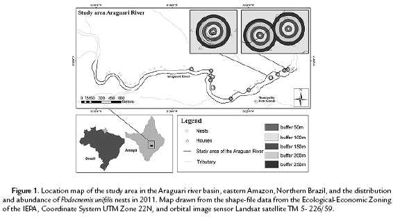 ANTHROPOGENIC IMPACTS ON YELLOW-SPOTTED RIVER TURTLE Podocnemis