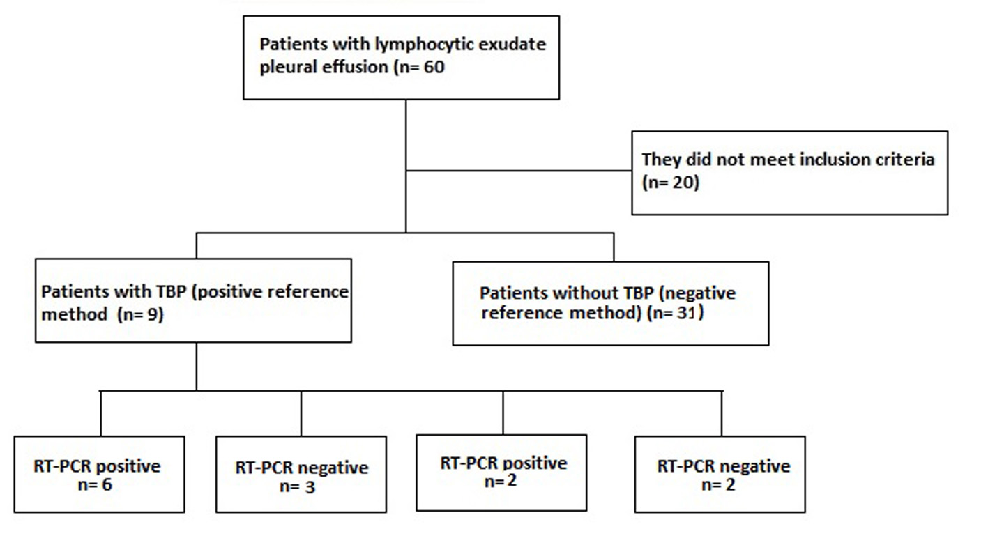 Real-time PCR assay for the diagnosis of pleural tuberculosis
