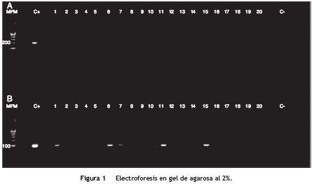 levothyroxine or synthroid