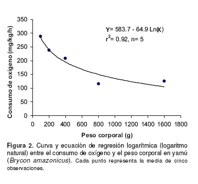 4c749fe3729a Effects of the body weight on the routine oxygen consumption of yamú ...