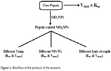 the method of estimation of pepsin activity was repeated and the pepsin  activity was calculated  the protocol of the research is presented in  figure 1