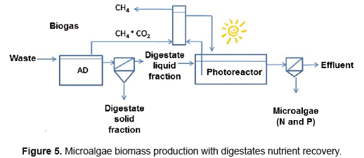 Upgrading Biogas To Natural Gas Quality