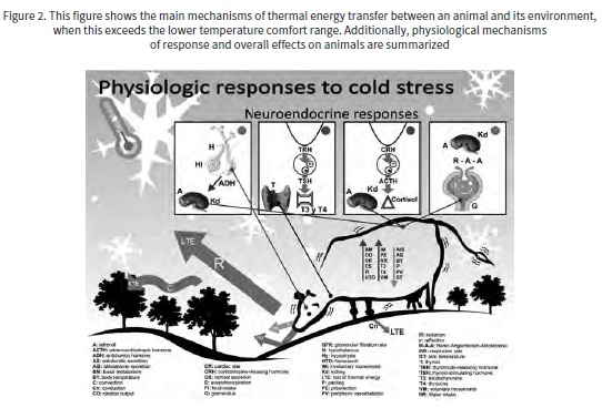 Adaptive Responses to Thermal Stress in Mammals