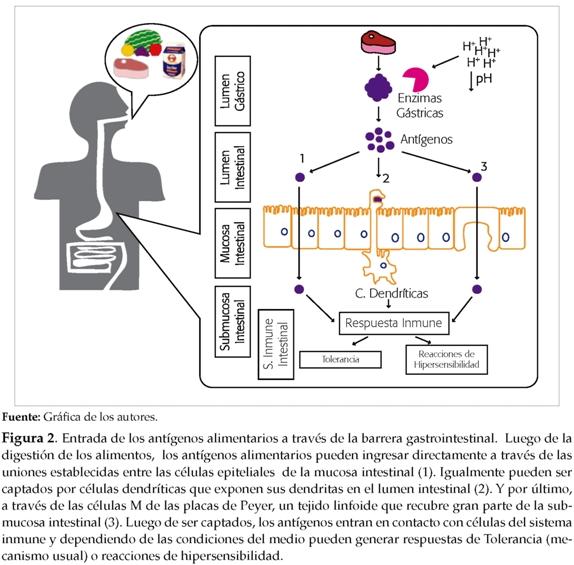 mecanismo accion corticosteroides pdf